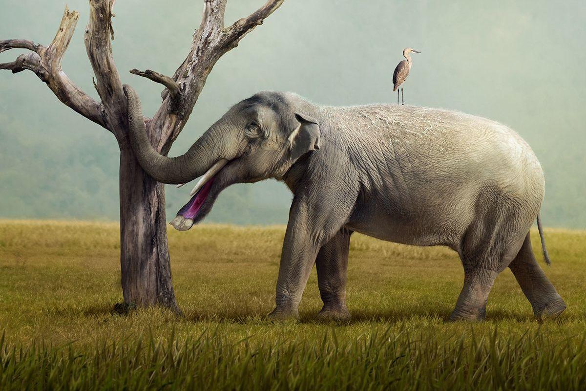Platybelodon grangeri
