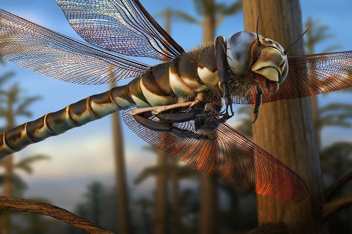 Meganeuropsis in flight