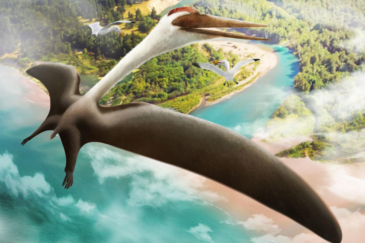 A Quetzalcoatlus soaring in the sky