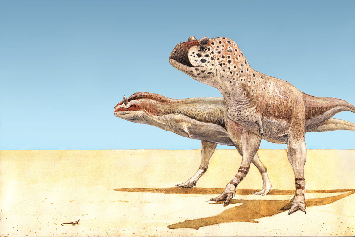 Pycnonemosaurus (right) and Carnotaurus (left), two abelisaurs