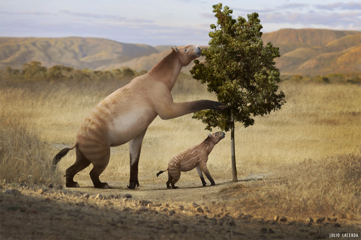A pair of adult and young Chalicotherium feeding on leaves.