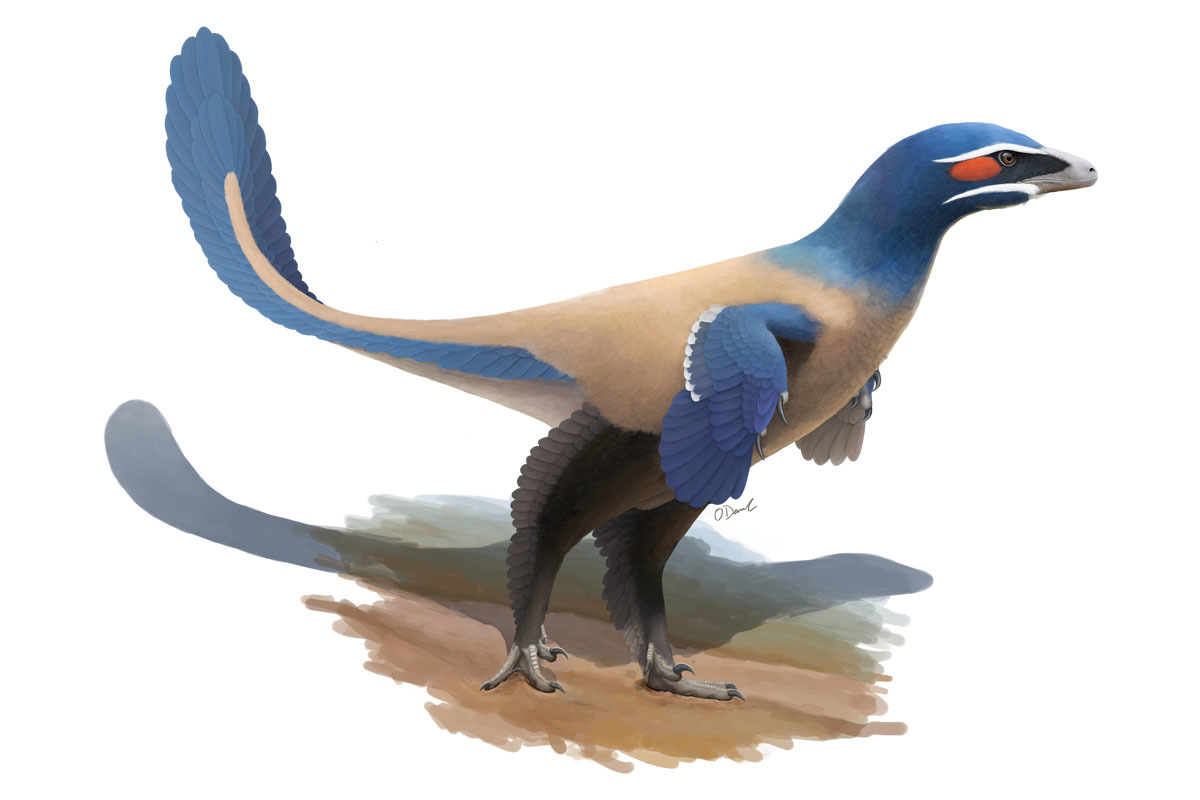 Artist's reconstruction of Albertavenator curriei