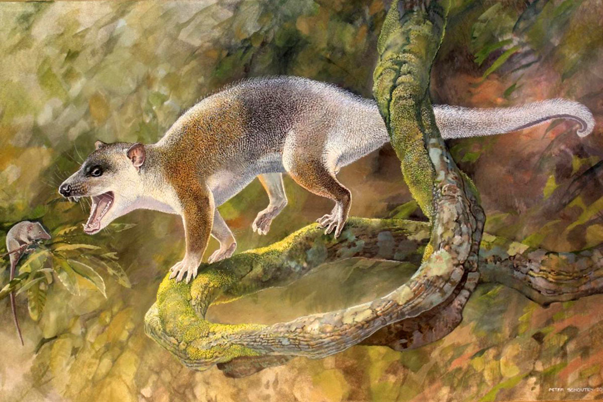 An artist's reconstruction of Anatoliadelphis
