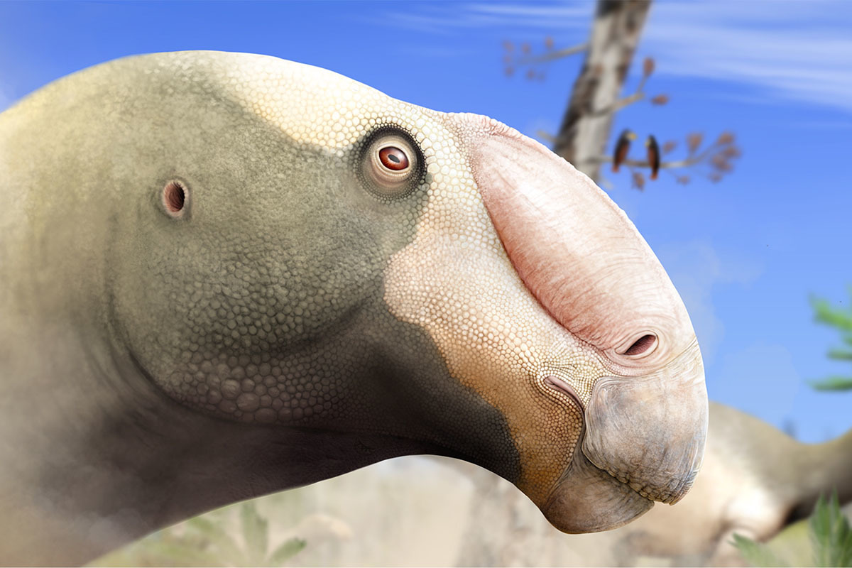 An artist's reconstruction on Choyrodon
