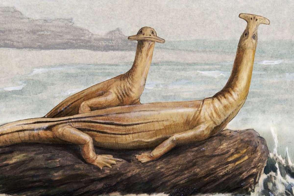 Pair of Atopodentatus