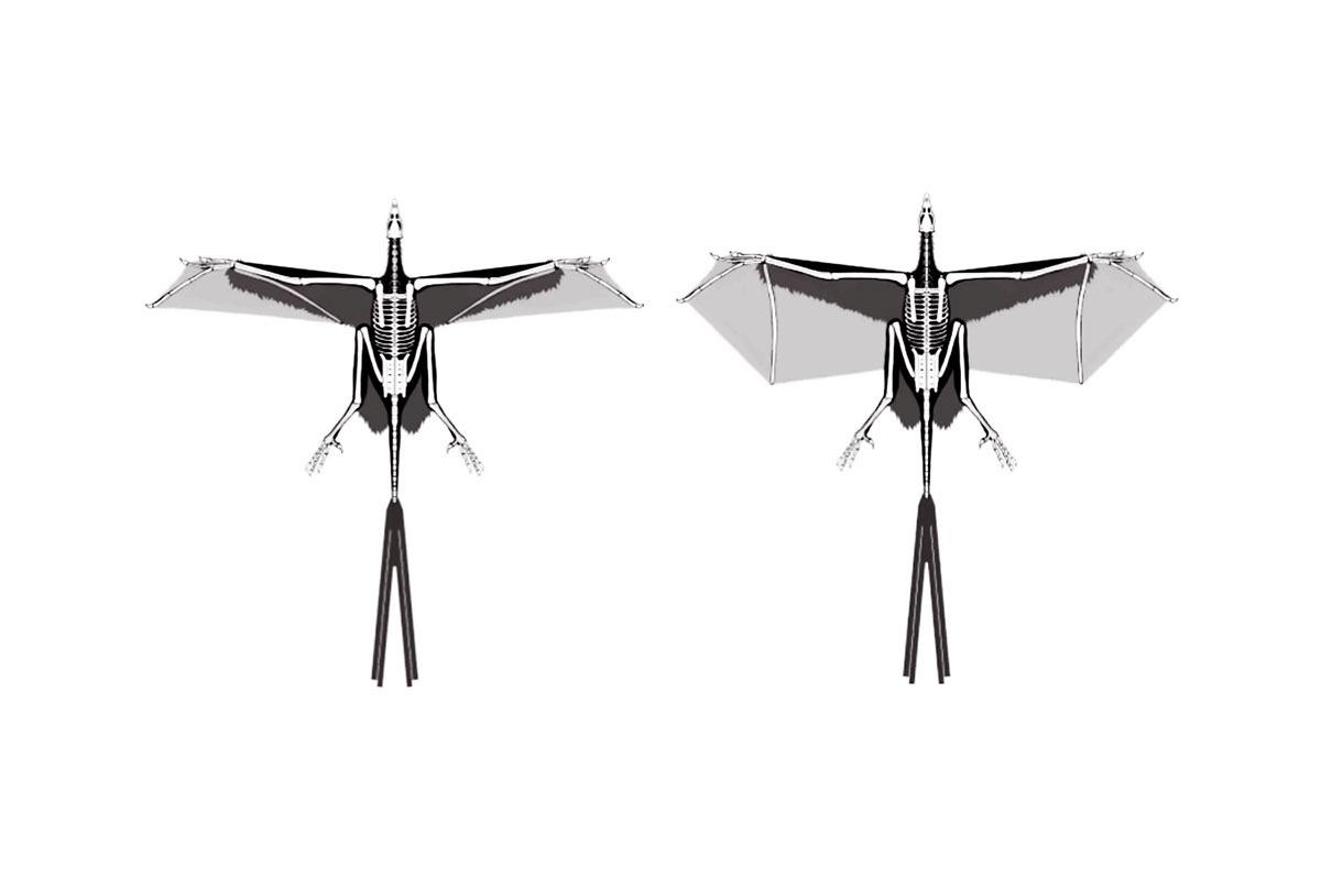 Yi qi's wings