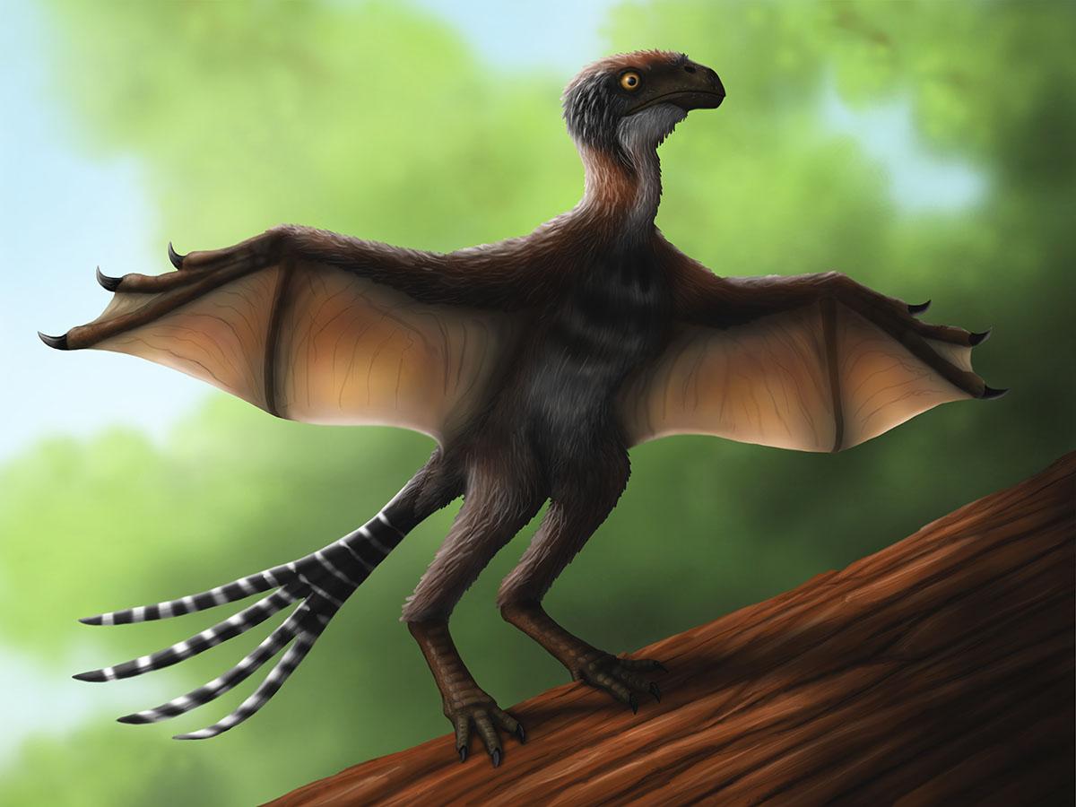 ambopteryx_nathan-e-rogers.jpg