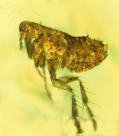 Trapped in time: The top 10 amber fossils | Earth Archives