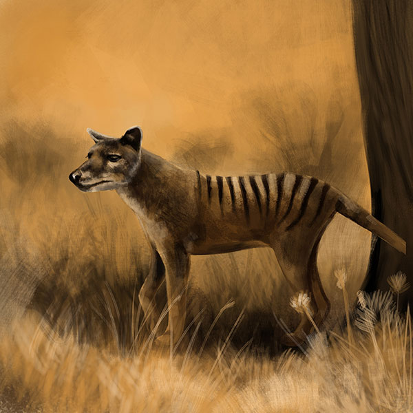 extinct animals recently memoriam prehistoric thylacine tiger species ten earth west google