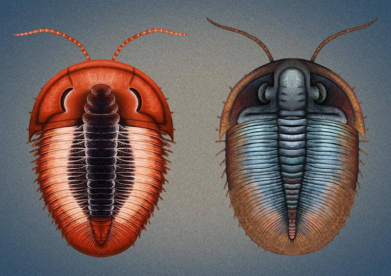 The Colorful World Of The Trilobites Earth Archives