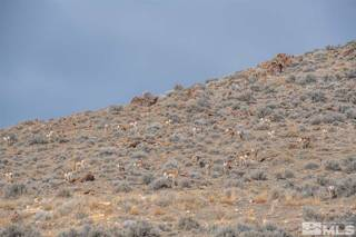 Listing Image 21 for The Bonanza King Mine, Lovelock, NV 00000-0000