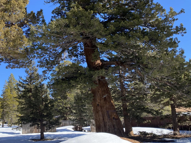 Image for 2013 Piute Street, South Lake Tahoe, CA 96150
