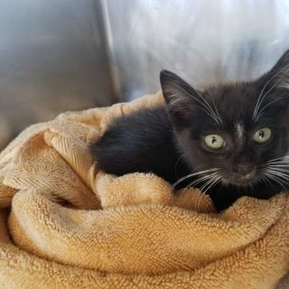 Kitten rescued from rush hour 101 traffic