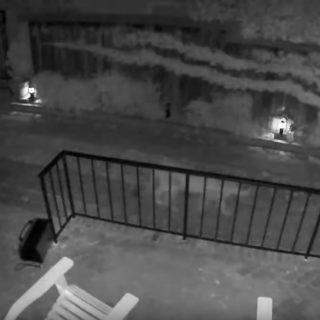 Mountain lion strolls through backyard on video