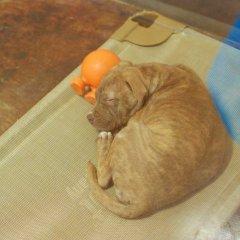 SPCA puppy