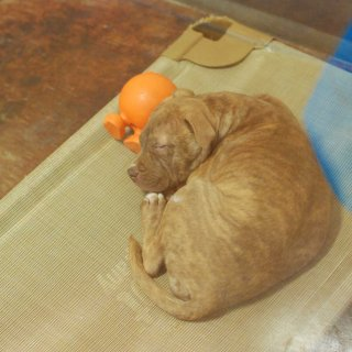 Proposal would ban sale of non-rescue puppies, kittens