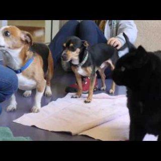 Burlingame shelter to waive adoption fees for senior animals