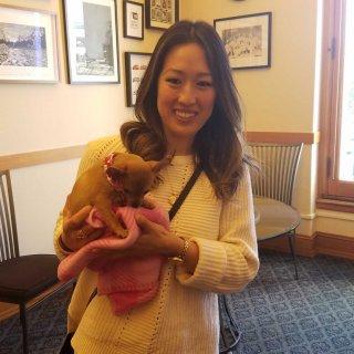 San Francisco bans non-rescue puppies, kittens