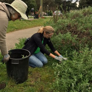 Volunteers restore Golden Gate Park bird habitat