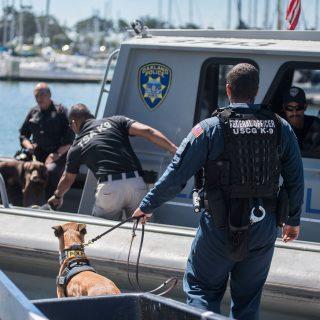 Police dogs sharpen bomb-sniffing skills at Berkeley Marina