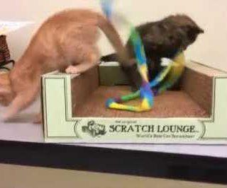 Fresh kittens flood Bay Area shelters
