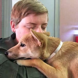 Alleged puppy abuser appears in court