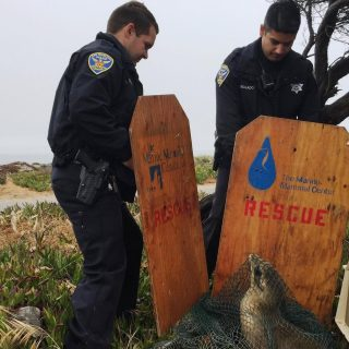 Sea lion pup rescued from Great Highway median