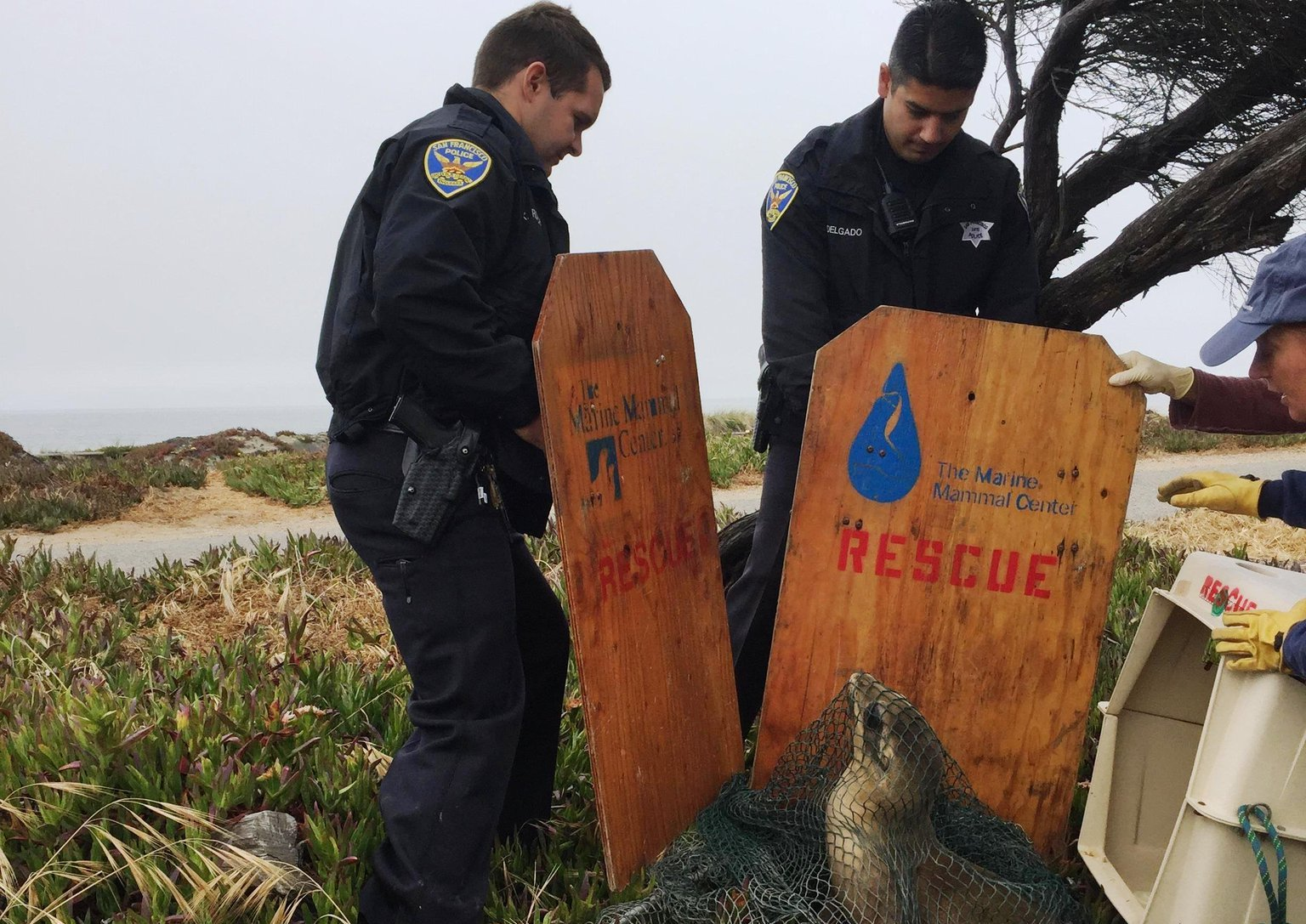 Sea Lion Rescue