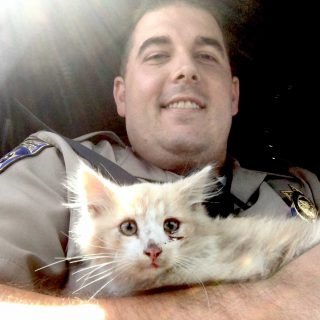 CHP plucks kitten from Golden Gate Bridge median