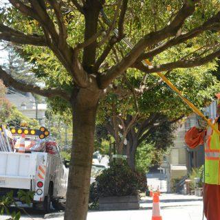 San Francisco reclaims upkeep of street trees