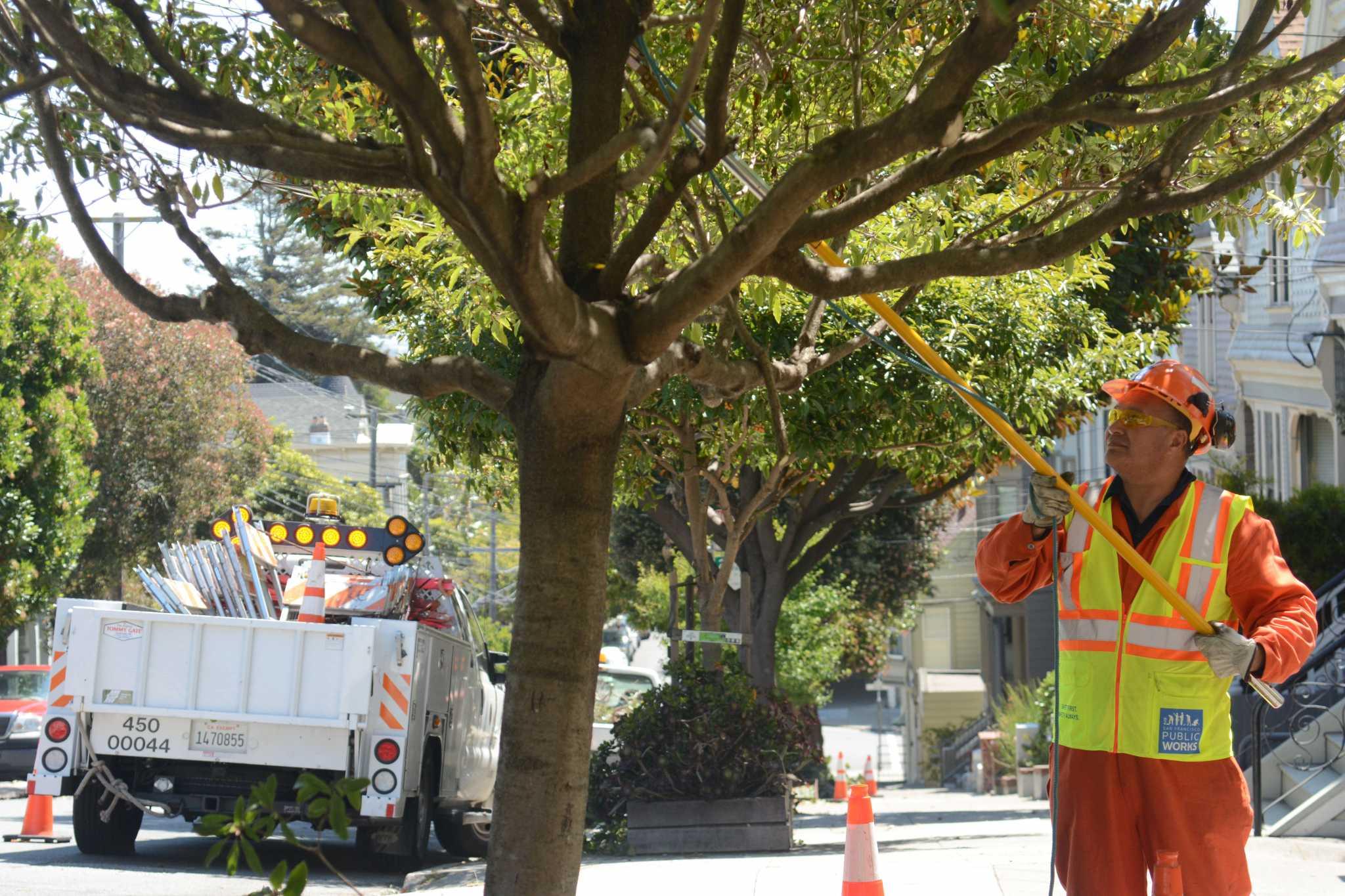 San Francisco street trees