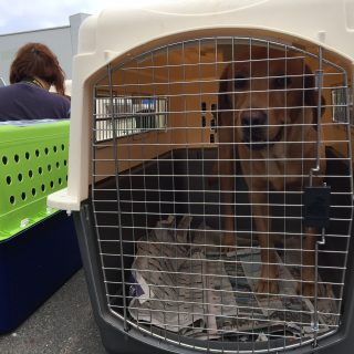 Shelter pets evacuate Hurricane Irma to East Bay