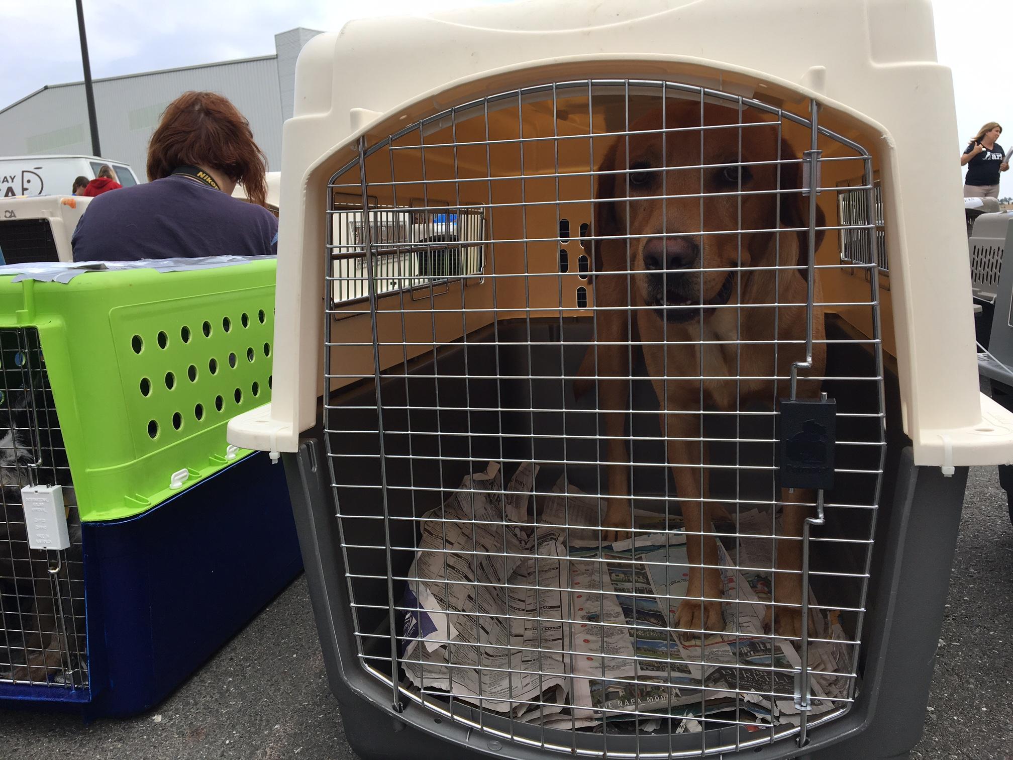 Hurricane Irma pets