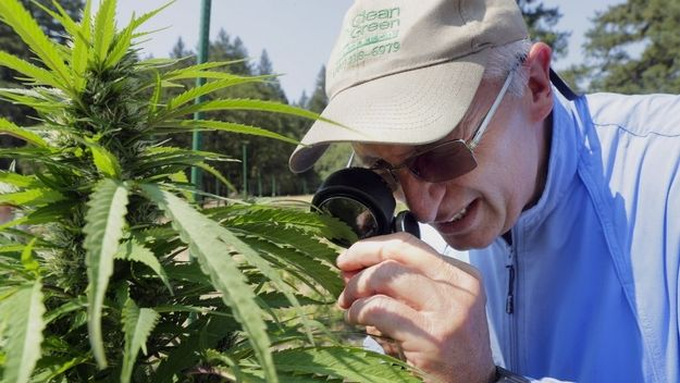 Clean Green Certified founder Chris Van Hook inspects a cannabis farm for potential certification.