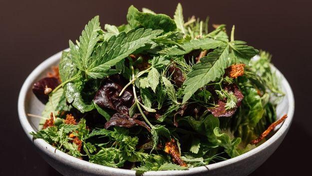 cannabis aroma
