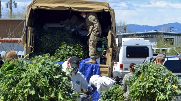 Investigators load marijuana plants onto a Colorado National Guard truck outside a suspected illegal grow operation in north Denver early Thursday, April 14, 2016. Investigators have raided several homes and warehouses throughout the Denver area as part of a multi-state investigation into the illegal distribution of marijuana outside Colorado. (AP Photo/P. Solomon Banda) SOURCE: P. Solomon Banda