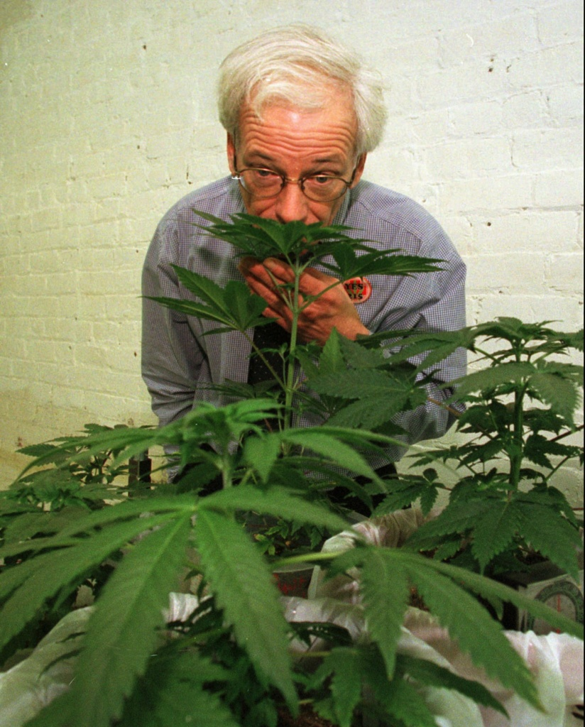 Dennis Peron, founder of the Cannabis Cultivators Club, sniffs a marijuana plant in his club's growing room in San Francisco, on Jan. 1, 1997. The combative leader of San Francisco's largest medical marijuana club is set to challenge Attorney General Dan Lungren for governor in the Republican primary. (AP Photo/Eric Risberg)