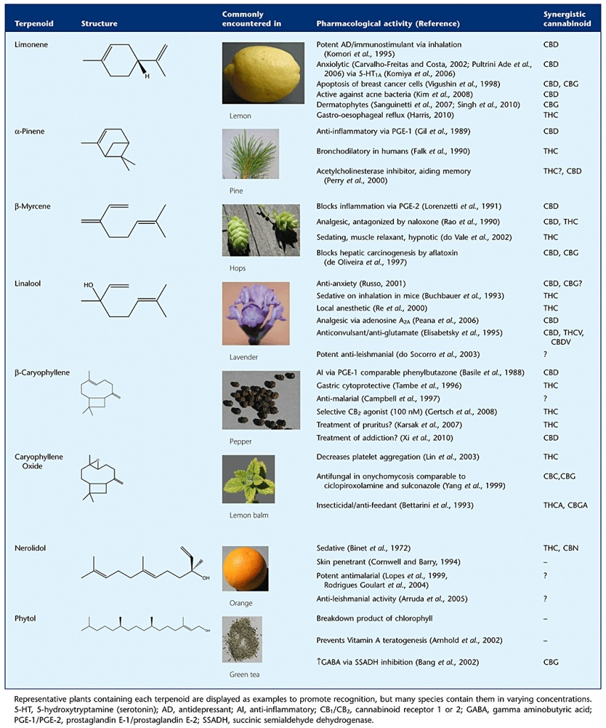 Russo's Taming THC chart of Terpenes, 2011