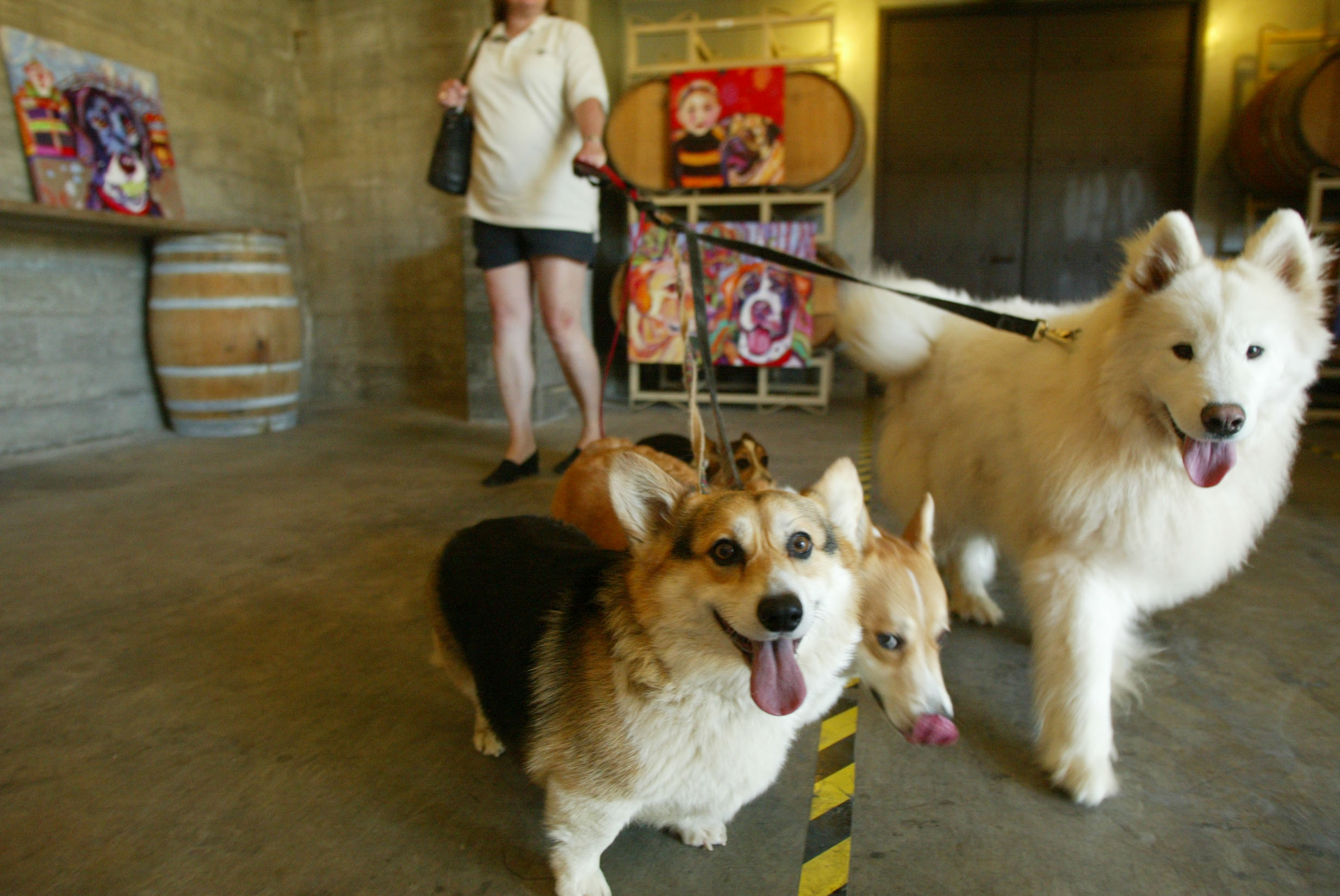 The best dog friendly wineries in Napa County | The Press