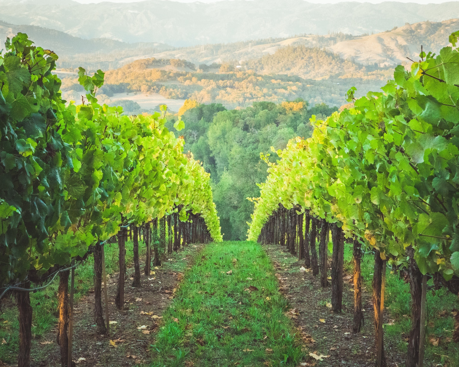 The 52 California wineries you need to visit in 2020 | The Press