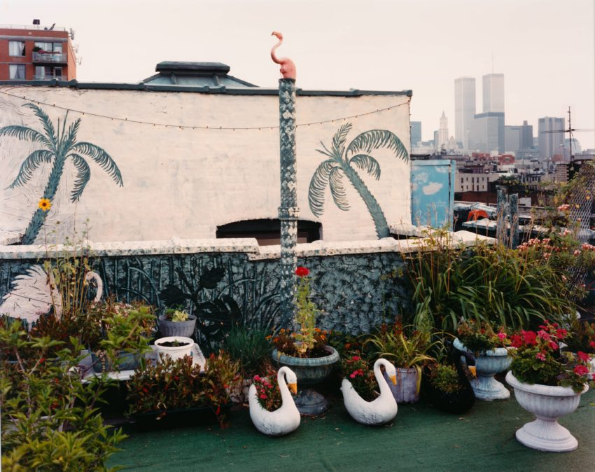 Laura Mcphee Rooftop Garden East Village New York From The