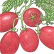 Tomato: Debarao image