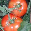 Tomato: Druzba image