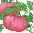 Tomato: Prudens Purple image
