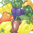 Peppers: Rainbow Bell Mix image