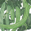 Cucumber: Telegraph (English Style) Improved image