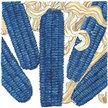 Corn: Hopi Blue Corn image