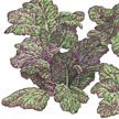 Mustard Greens: Giant Red image