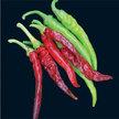 Peppers: Burpee Signature Hot Pepper image
