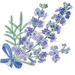 Lavender: Munstead image